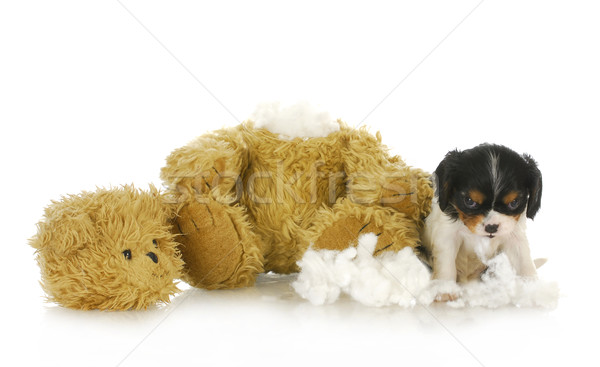 Stock photo: naughty puppy
