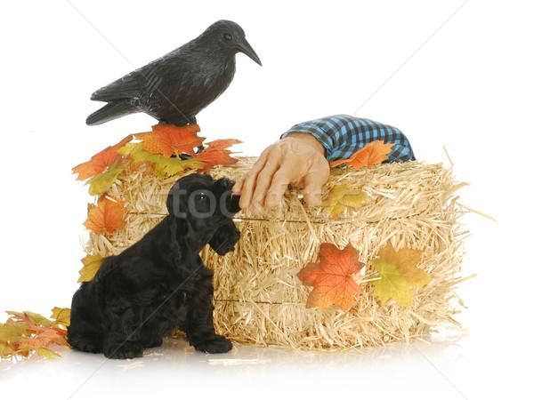 Halloween kutyakölyök amerikai kéz kutya madár Stock fotó © willeecole