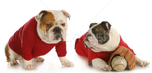 dog baseball team Stock photo © willeecole