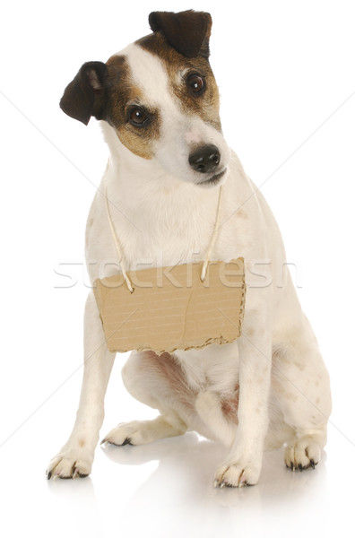 dog with a message Stock photo © willeecole