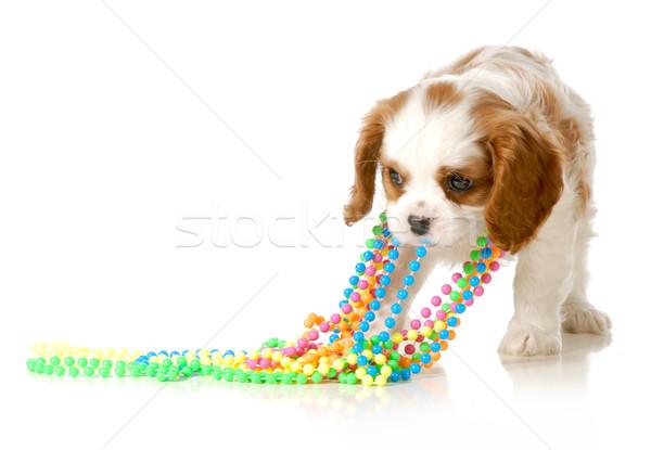 Ondeugend puppy koning kleurrijk kralen Stockfoto © willeecole