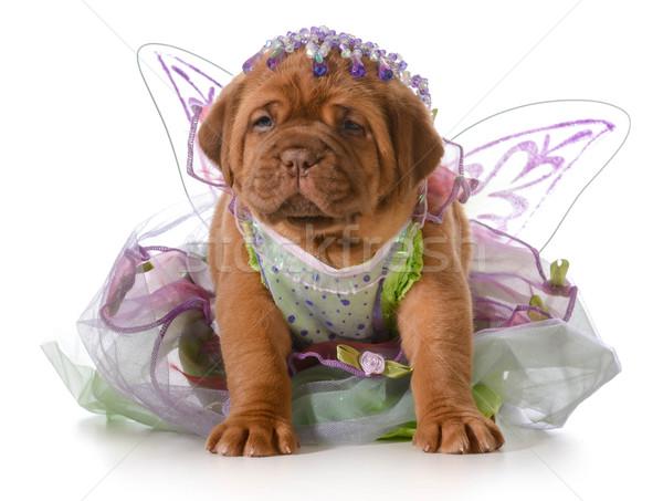 女性 子犬 ボルドー 着用 王女 ドレス ストックフォト © willeecole