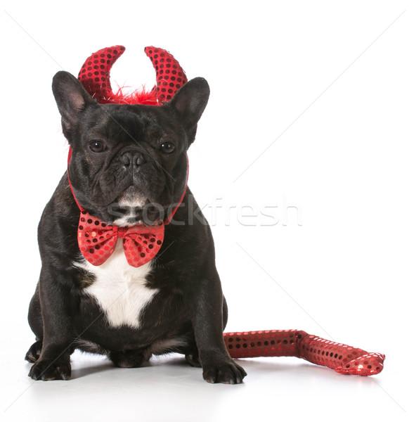 naughty dog Stock photo © willeecole