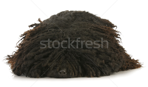 corded puli Stock photo © willeecole