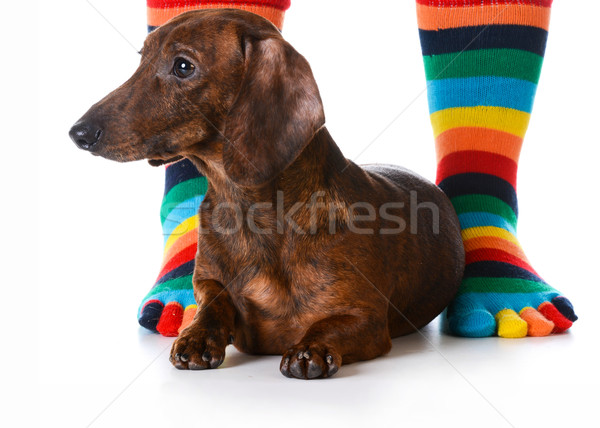 Stock photo: dog sitting with owner