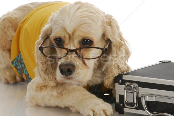 Animal negócio para cima traje de negócios luz fundo Foto stock © willeecole