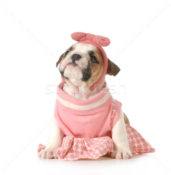 Сток-фото: Cute · женщины · щенков · бульдог · сидят
