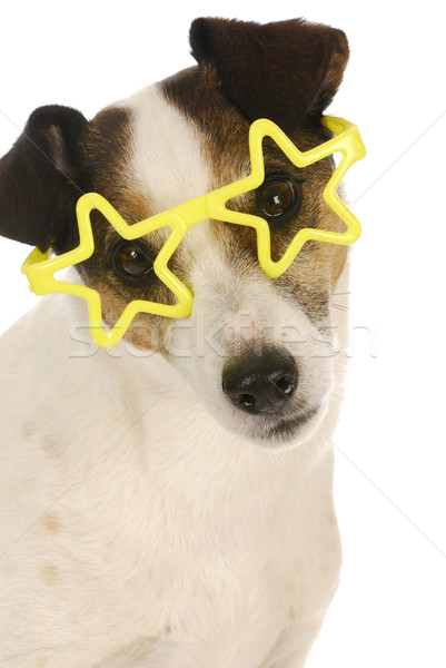 Stock photo: famous dog