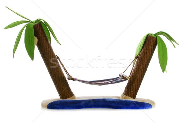 Stock fotó: Macska · ágy · posta · függőágy · kettő · pálmafák