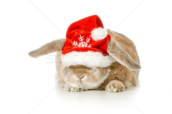 Christmas bunny konijn hoed Stockfoto © willeecole