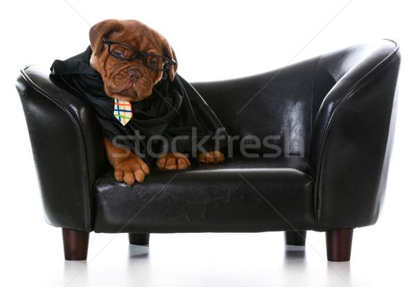 business dog Stock photo © willeecole