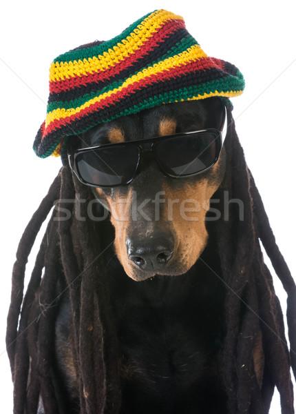 dog in costume Stock photo © willeecole