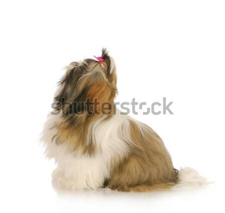Stock photo: dog ready to jump up