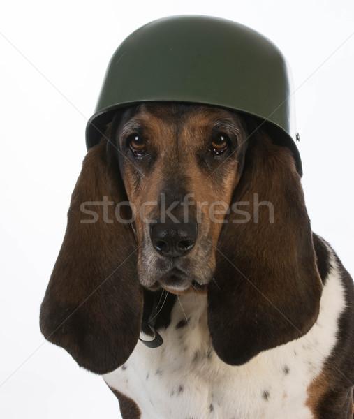 Kutyaféle katona vadászkutya visel katonaság sisak Stock fotó © willeecole