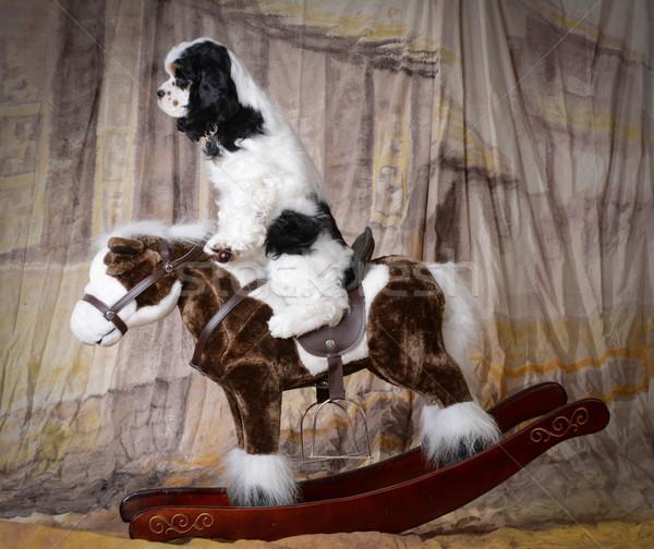 Chien équitation cheval cheval à bascule rouge Photo stock © willeecole