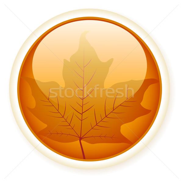 ősz fényes gomb levél Stock fotó © wingedcats