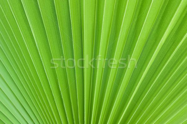Folha de palmeira árvore folha fundo verão padrão Foto stock © winnond