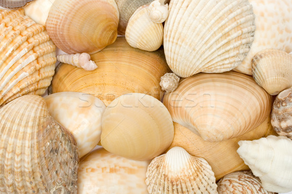 Various Seashells Stock photo © winterling