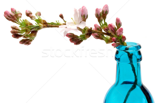 Blooming Branch in a Bottle Stock photo © winterling