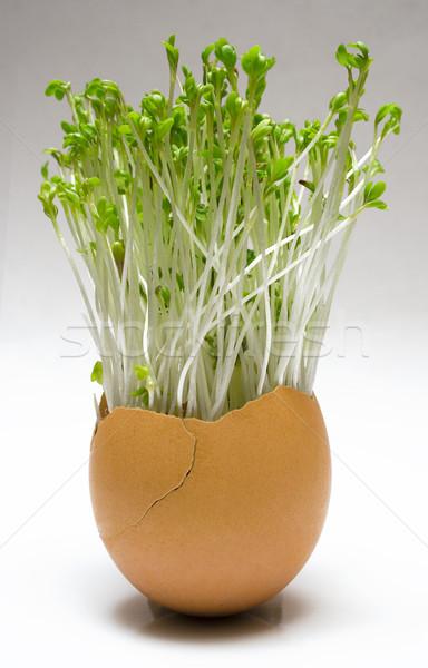 Voorjaar easter egg groeiend eierschaal bloemen blad Stockfoto © winterling