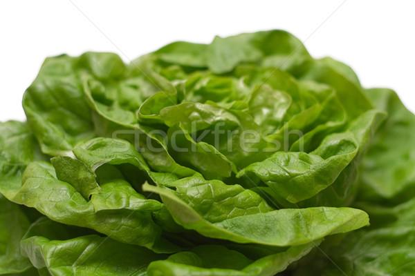 Lettuce Close-up Stock photo © winterling