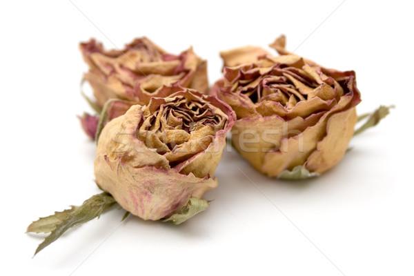 Séché roses trois isolé blanche fleurs Photo stock © winterling