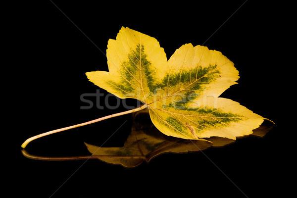Arany levél ősz fekete tükröződő szín Stock fotó © winterling