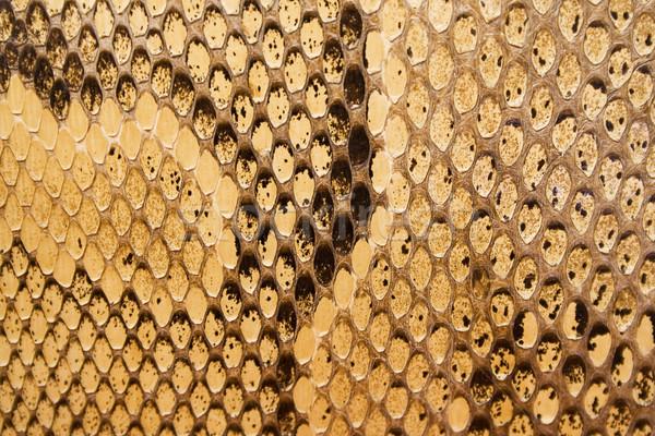 Golden Snakeskin Texture Stock photo © winterling