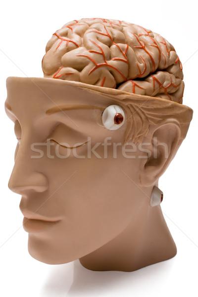 Model geïsoleerd witte gezicht geneeskunde Stockfoto © winterling