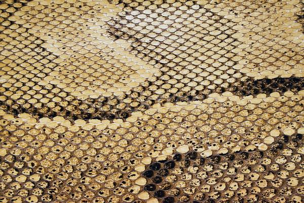 Foto stock: Réptil · textura · serpente · pele · fundo · texturas