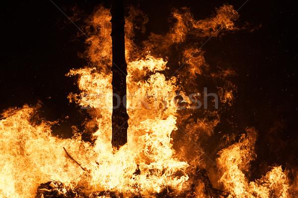 Pożar lasu ognia lesie noc niebo drzew Zdjęcia stock © winterling
