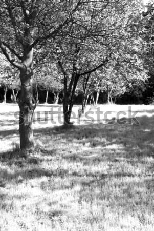 bw garden Stock photo © wisiel