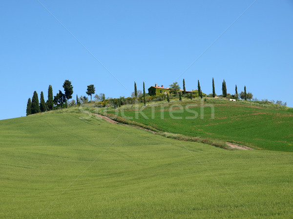 The landscape of the Val d'Orcia. Tuscany Stock photo © wjarek