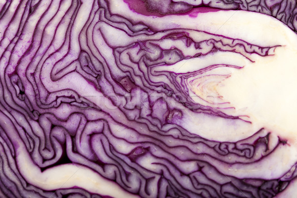 Red Cabbage cross section on White Background  Stock photo © wjarek