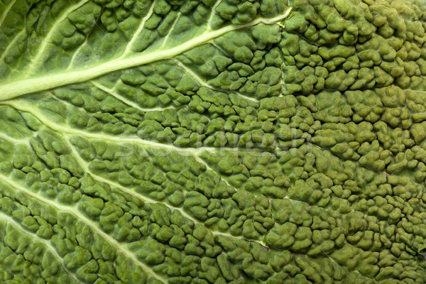 fresh savoy cabbage leaf as a texture  Stock photo © wjarek