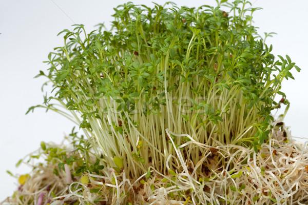 Taze alfalfa beyaz doku gıda soyut Stok fotoğraf © wjarek