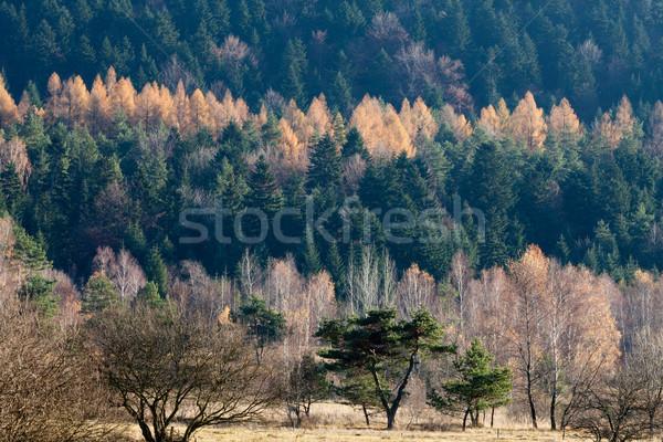 осень цветами гор трава лес природы Сток-фото © wjarek