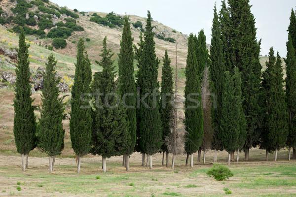 Idyllic landscape with  cypress  Stock photo © wjarek