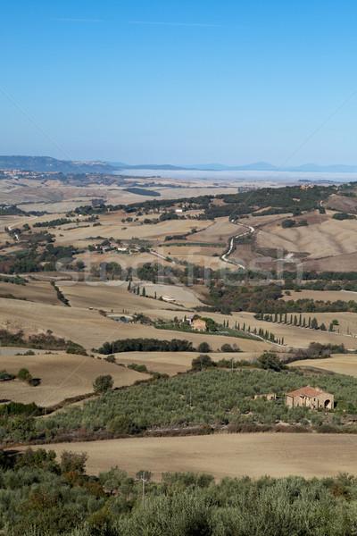 Heuvels rond Toscane Italië boom landschap Stockfoto © wjarek