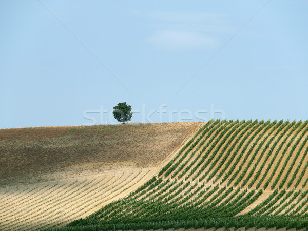 Tuscan landscape in the best edition Stock photo © wjarek