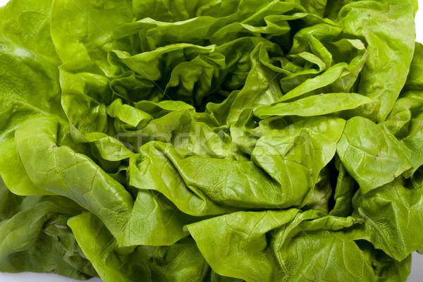 新鮮な 緑 レタス サラダ 孤立した 白 ストックフォト © wjarek