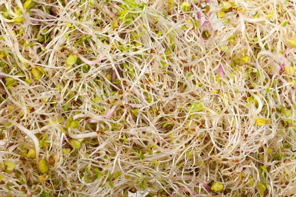 Photo stock: Fraîches · luzerne · isolé · blanche · texture · alimentaire