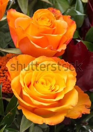Oranje steeg geïsoleerd witte bloem Stockfoto © wjarek