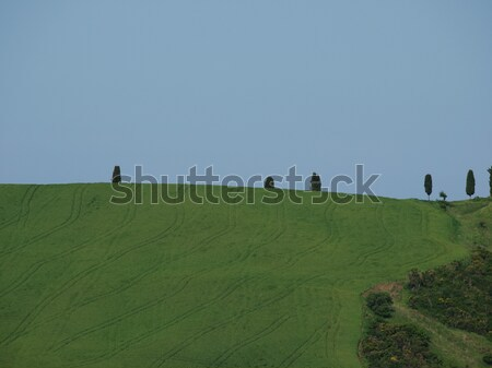 The landscape of the Val d'Orcia. Tuscany. Italiy Stock photo © wjarek