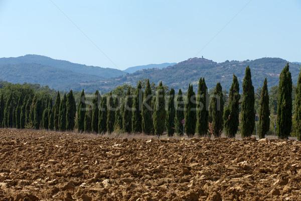 Manzara Toskana İtalya ağaç yol yaz Stok fotoğraf © wjarek