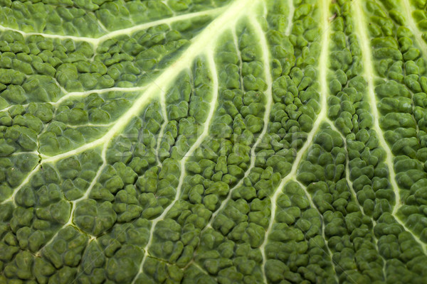 Vers kool blad textuur natuur achtergrond Stockfoto © wjarek