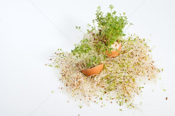 Fresh Alfalfa Sprouts and Spring Easter Egg Stock photo © wjarek