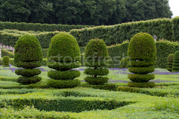 Splendid, decorative gardens at castles in the Valley of Loire Stock photo © wjarek