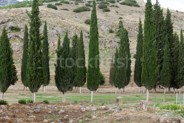 Idyllisch landschap huis boom landbouw Stockfoto © wjarek