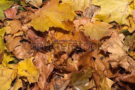 впечатление листьев осень цветами текстуры лес Сток-фото © wjarek